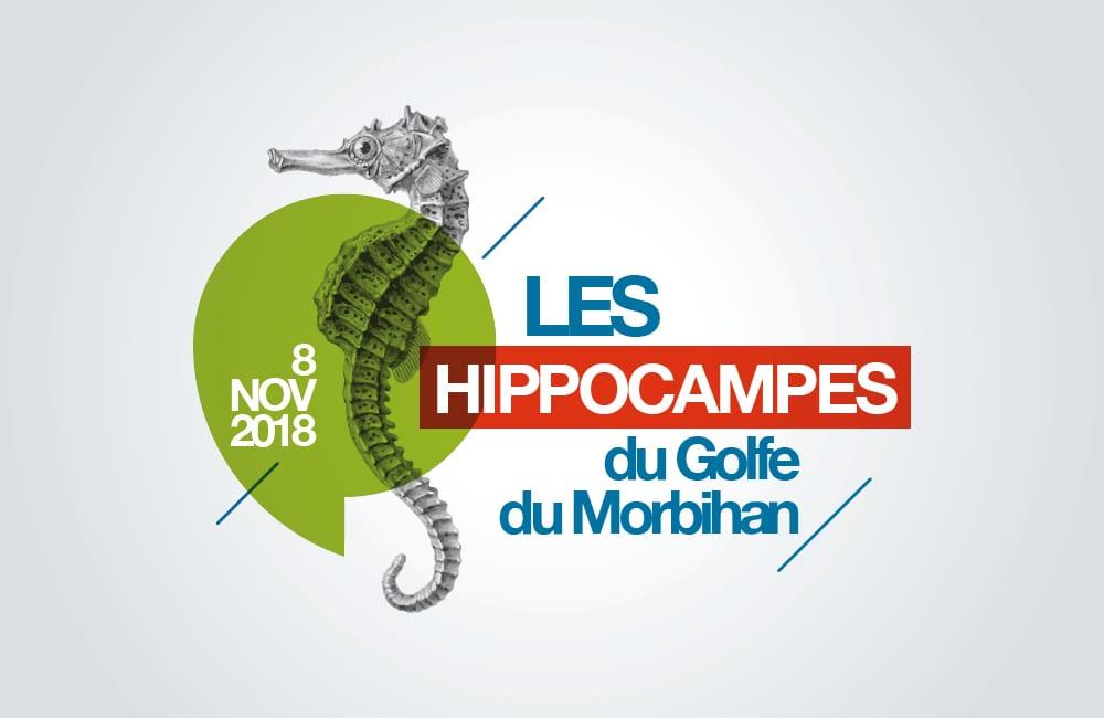Logo Les Hippocampes du Golfe du Morbihan